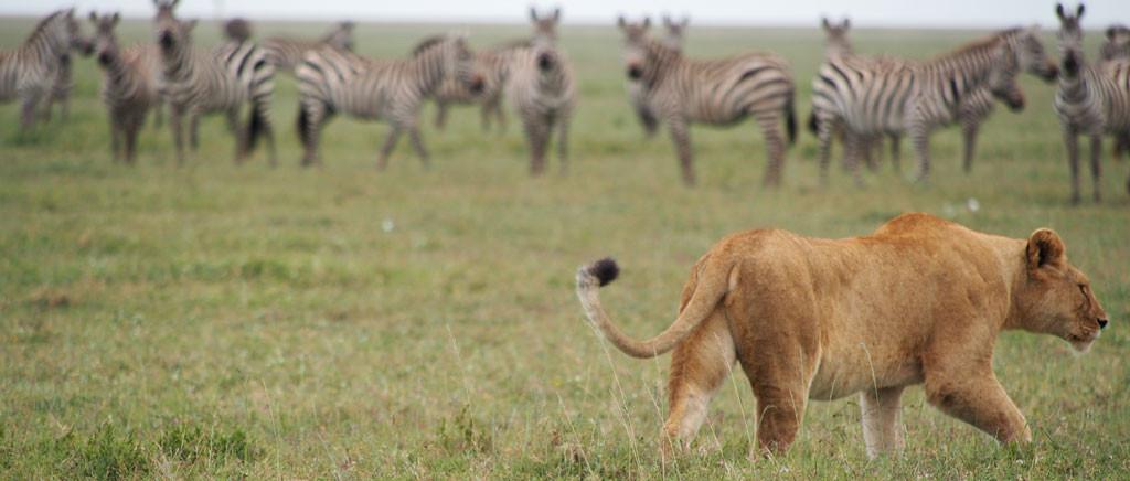 Northern-Circuit-(Serengeti)