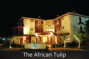 The-African-Tulip