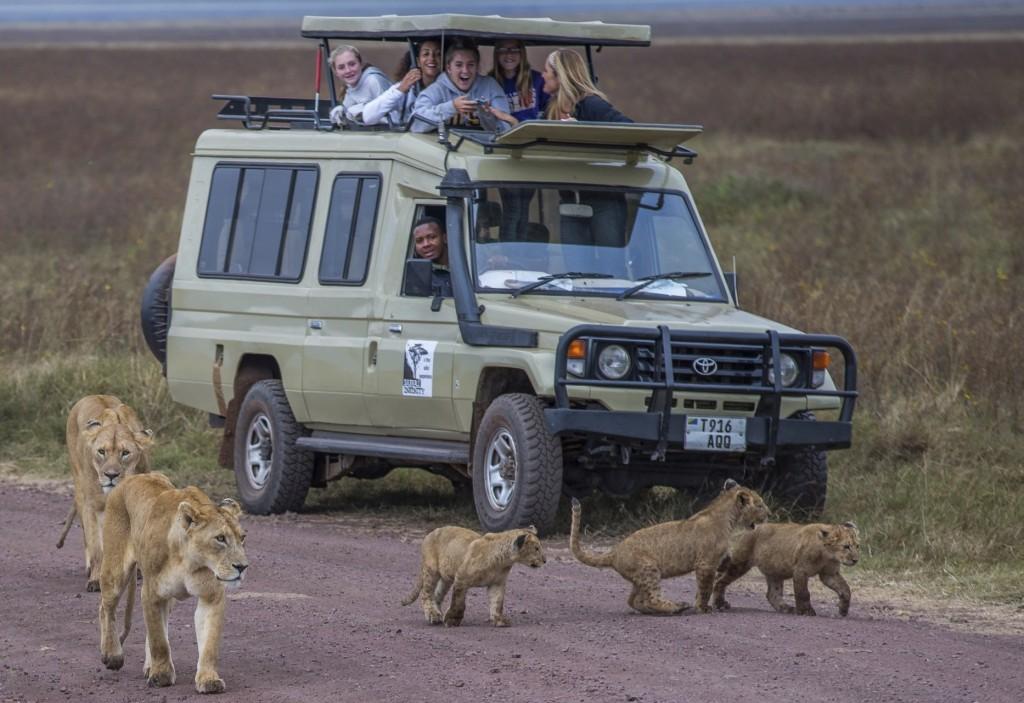 Lion & cubs (Sharon L.)