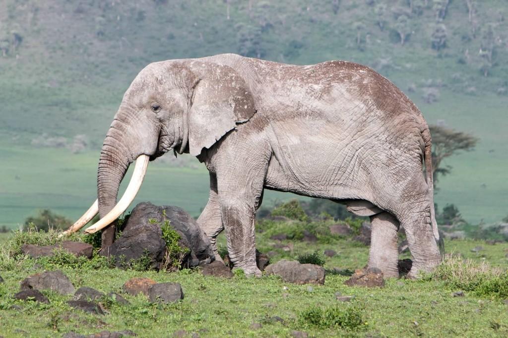 Elephant - Tania with Safari Infinity